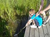 Beaver Pond Dipping
