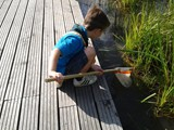Beaver Pond Dipping 2