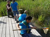 Beavers Pond Dipping