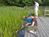 Beavers Pond Dipping 2